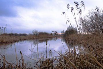 Winter in Friesland van Jelte Bosma