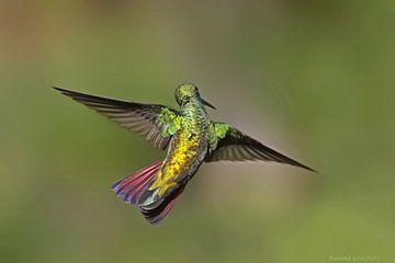 Beija-flor-de-veste-preta van Birdy Flying