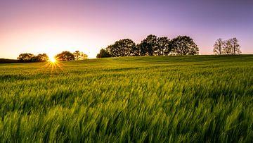 Sonnenuntergang am Feld von Steffen Henze