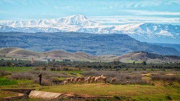 der Schäfer und seine Ziegenherde in der herrlich geschichteten Landschaft Marokkos. von Studio de Waay