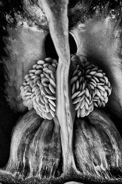 Paprika van Hans Vos Fotografie