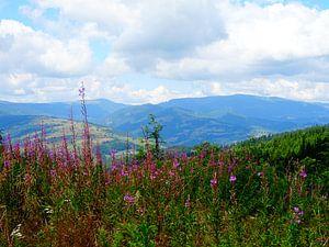 Bergen in Roemenië  von Wilma Rigo