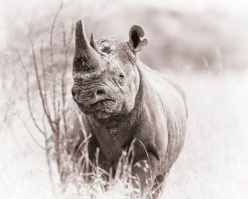 Zwarte neushoorn van De Afrika Specialist