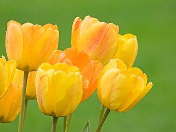 Gele tulpenbloemen van Katrin May