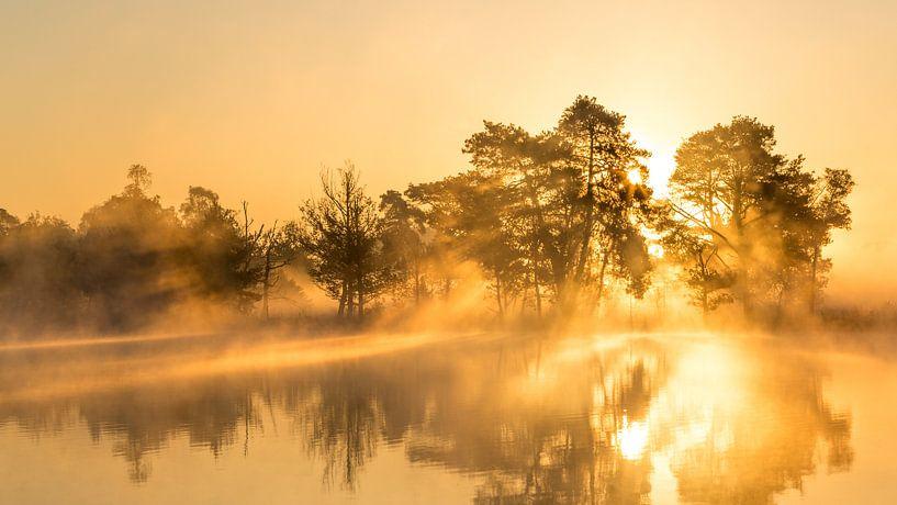 Morning Glory van Sjaak den Breeje