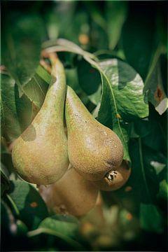 Prachtige peren genietend van de zon van Joaquin van Marle
