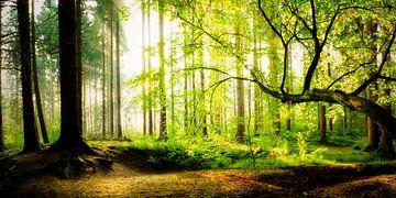 Licht overstroomd bos van