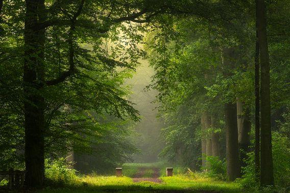 Sprookjesbos in het ochtendlicht van Edwin Mooijaart