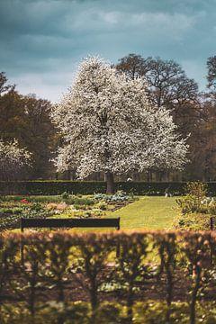 Hackfort Gärten von S van Wezep