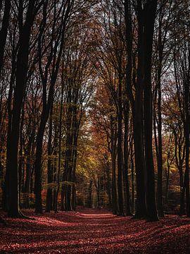 Herbsttag im Speulderbos von Roos Maryne - Natuur fotografie