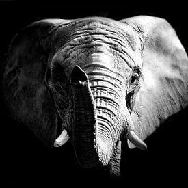 Afrikaanse Olifant van Mark Zanderink