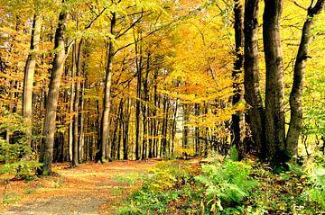 Willkommen schöner Herbst von bernd hiep