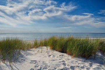 Ostsee Dünen von Claudia Moeckel