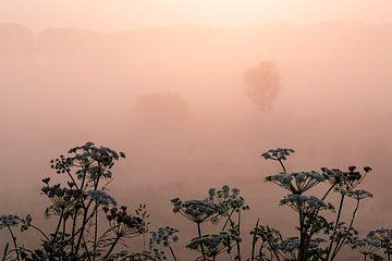 Veld tussen Megen en Haren in de mist van Wouter Bos