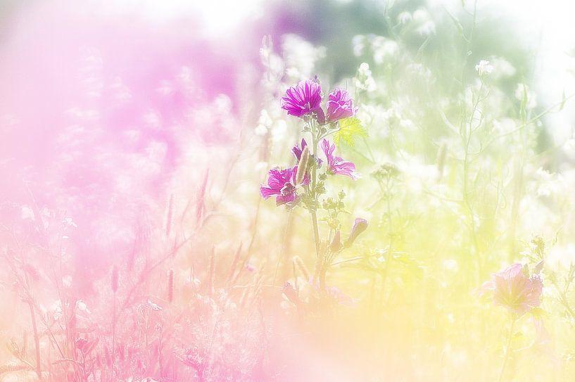 Kleurige wilde bloemen in een berm. van Ron Poot