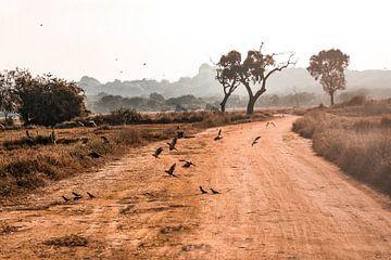 Safari von Fotoverliebt - Julia Schiffers