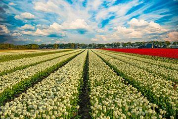 Tulpenfelder in den Niederlanden von Gert Hilbink