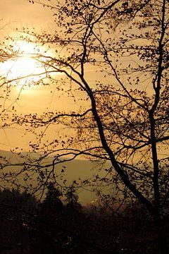 Oranje late middag zon von Assia Hiemstra