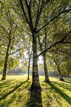 Lichtval in het Bos von Alex Hiemstra