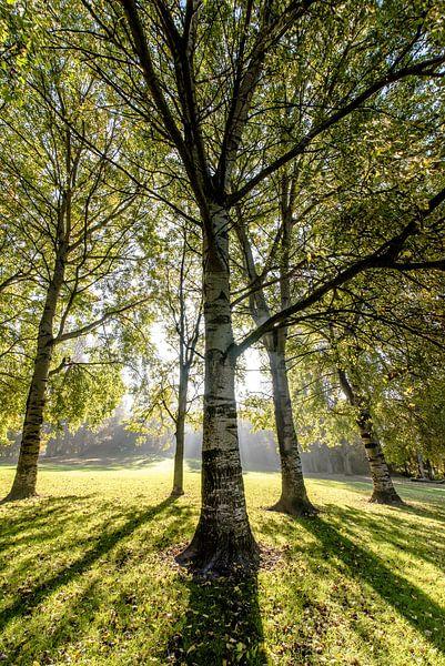 Lichtval in het Bos van Alex Hiemstra