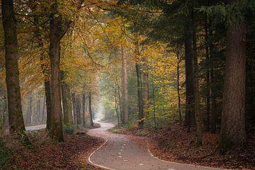 Der gewundene Weg #1 von Edwin Mooijaart