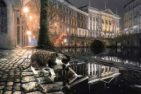 Hello Kitty - Katze in Utrecht von Wesley Heyne