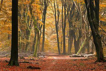 Bospad in de herfst van Elly Besselink