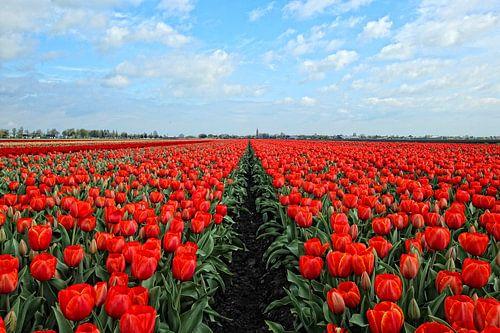 Vandaag is rood......