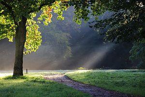 Frühe Sonnenstrahlen im Wald von Jolanda Kars