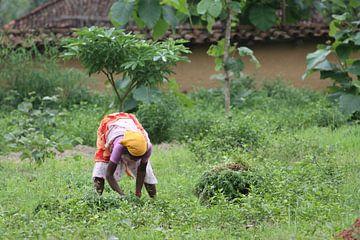 Onkruid plukken op het platteland van Cora Unk