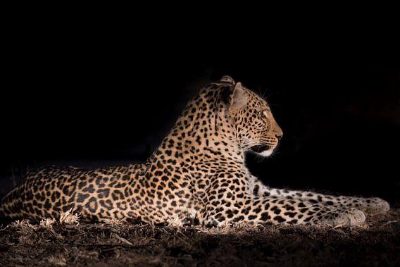 Luipaard in de nacht