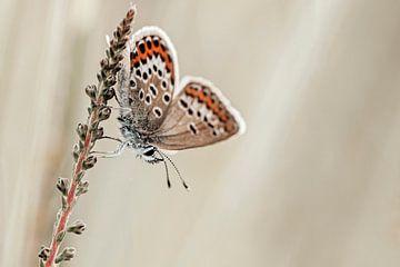 Bleu bruyère avec de belles ailes sur Roosmarijn Bruijns
