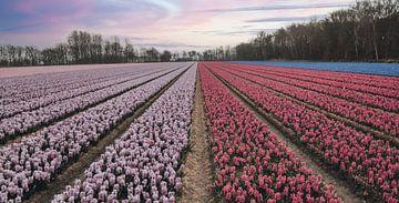 Reihen von bunten Blumen und pastellfarbenen Himmel von Sanne Dost