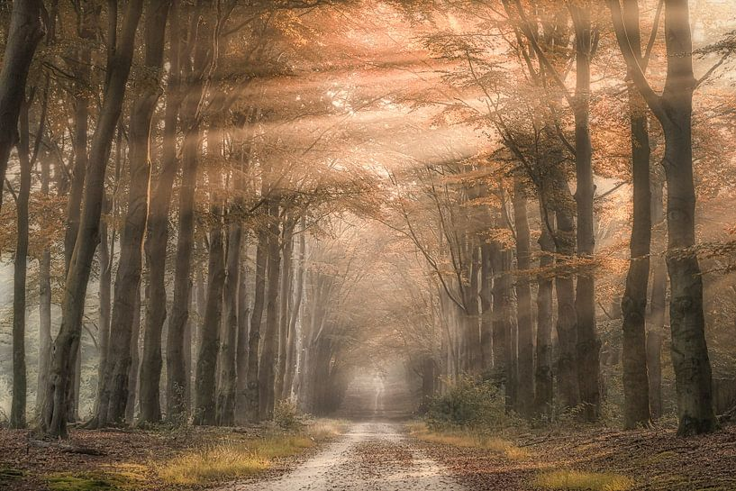 Het regent zonnestralen van Niels Barto