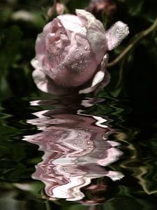 sprankelende - rozenwater