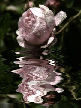 sprankelende - rozenwater van Christine Nöhmeier