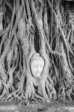 Boeddha hoofd in boomwortels van Ben van Boom
