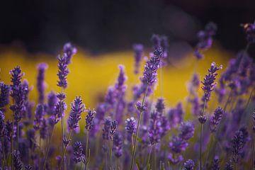 Lavendel Freude von Hiske Boon
