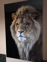 Kundenfoto: Porträt eines Löwen von Tazi Brown, auf alu-dibond