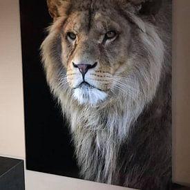 Klantfoto: Portret van een leeuw van Tazi Brown, op aluminium