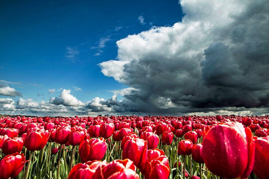 Tulpenveld net voor de regenbui van Gert Hilbink