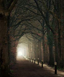 Friesland's finest forest