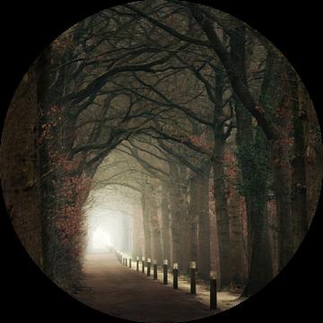 Friesland's finest forest van Niels Tichelaar