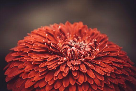 Boven op een rode bloem
