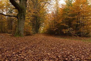 Herfst van Rijk van de Kaa