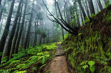 Regenachtig bos, Pico da Vara, Sao Miguel, Azoren Portugal van Sebastian Rollé - travel, nature & landscape photography