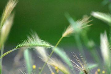 Getreide und Gras von Niek Traas