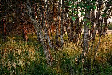 Abend im Naturschutzgebiet