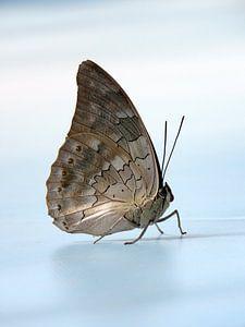 Vlinder in de lucht van