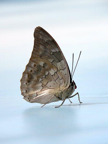 Vlinder in de lucht van Aagje de Jong